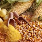 Maize Day