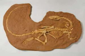 When is National Fossil Day