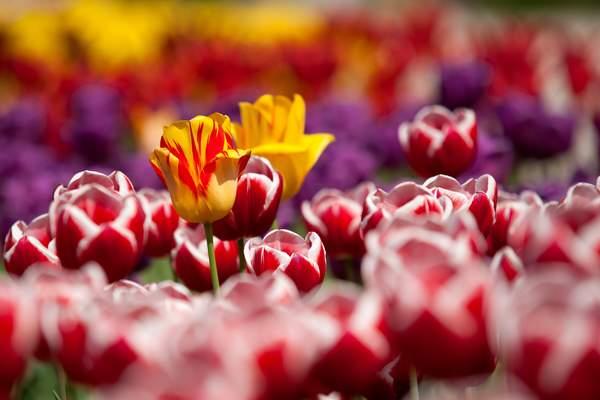 Free Flower Basket Day
