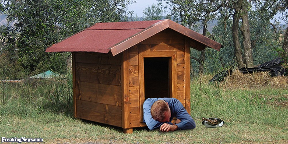 National Get Out of the Doghouse Day