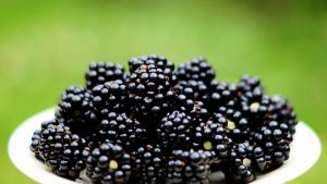 National Poisoned Blackberries Day