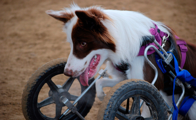National Specially-abled Pets Day