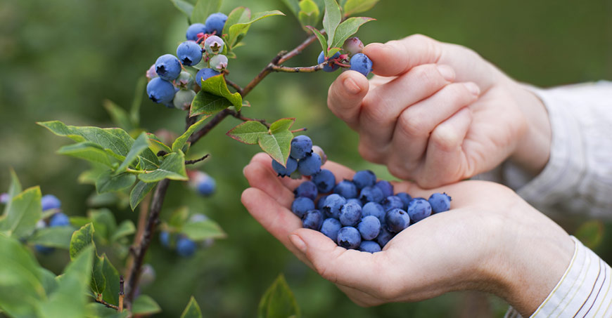 Pick Blueberries Day
