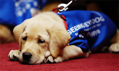 Seeing Eye Dog Day