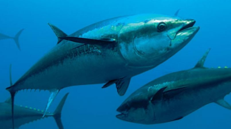 World Tuna Day